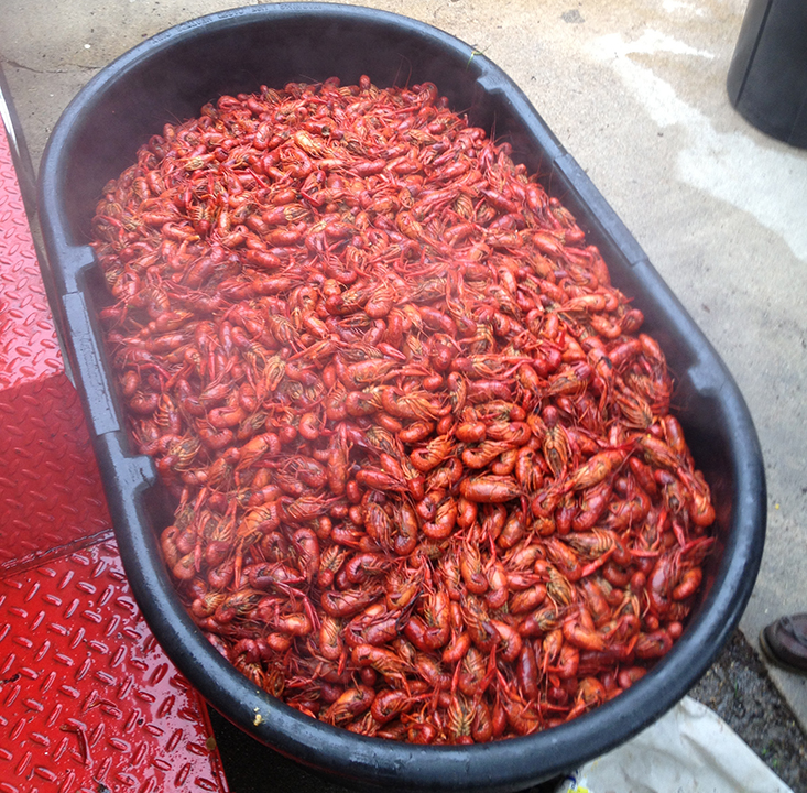 All Star Catering - Crawfish Boils